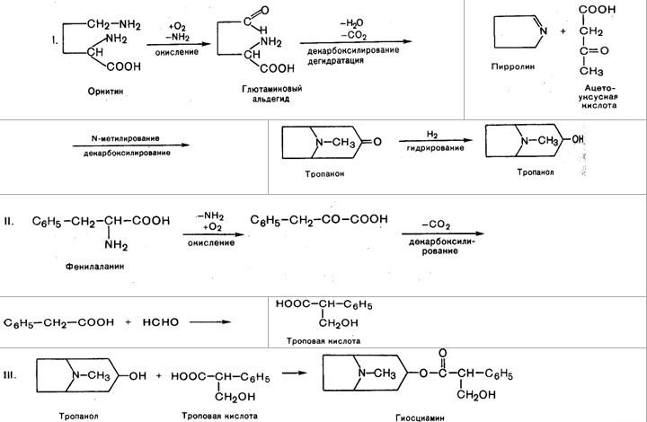 Биогенез алкалоидов