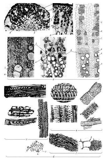 Микроскопия корня солодки