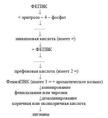 биогенез лигнанов