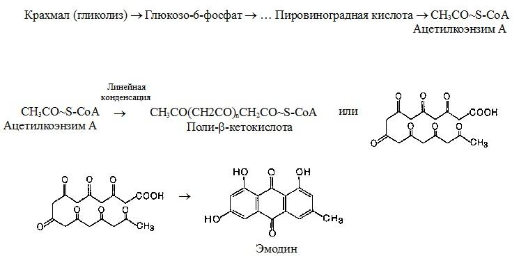 Биогенез производных антрацена
