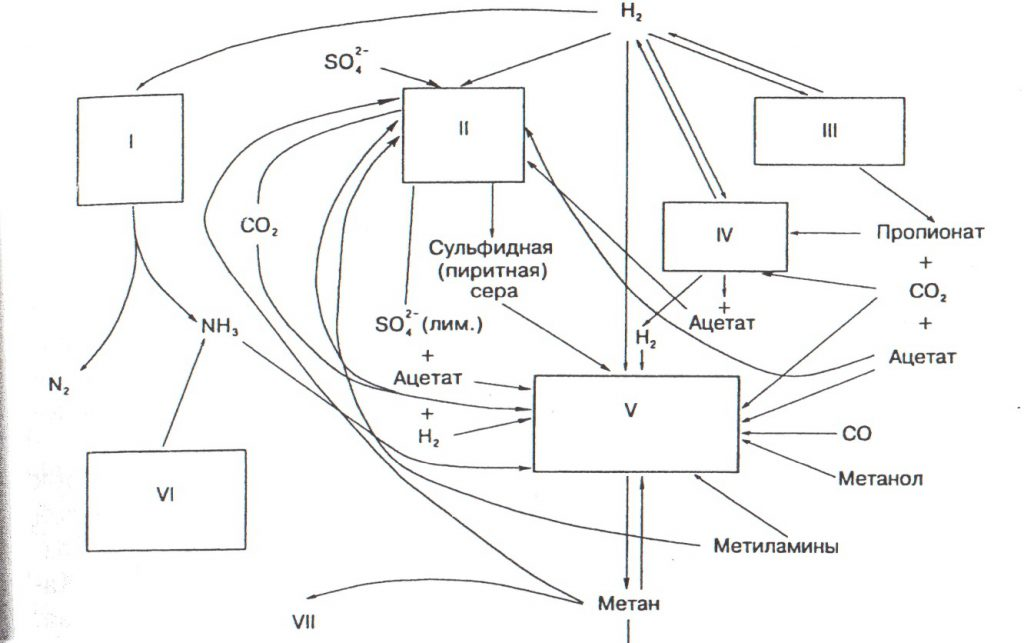 Взаимодействие микроорганизмов в анаэробных условиях заключительной стадии катаболизма