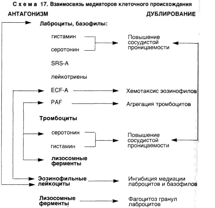 Воспаление. Взаимосвязь медиаторов клеточного происхождения
