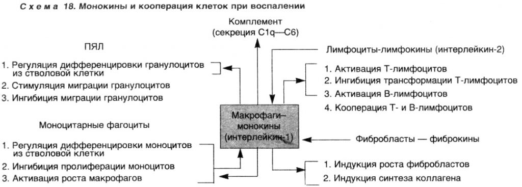 Воспаление. Монокины и кооперация клеток при воспалении