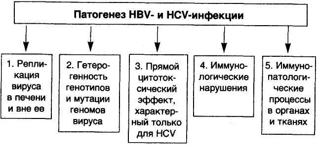 Патогенез HBV- и HCV-инфекции. Болезни печени.