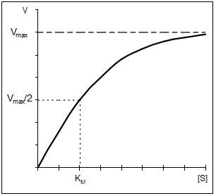 Математическое описание кривой субстратного насыщения
