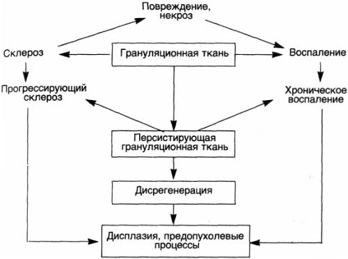 Воспаление. Механизм дисрегенерации