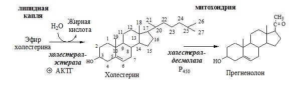 Синтез кортикостероидов