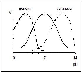 Зависимость скорости реакции от рН