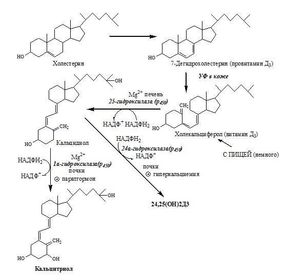 синтез Кальцитриола из холестерола