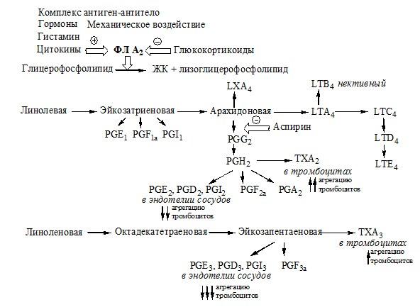 Схема образования эйкозаноидов. Гормоны