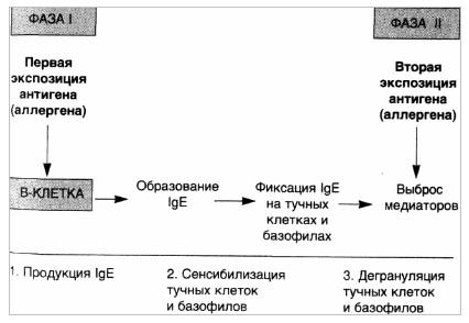 Реакции гиперчувствительности I типа — анафилактические реакции