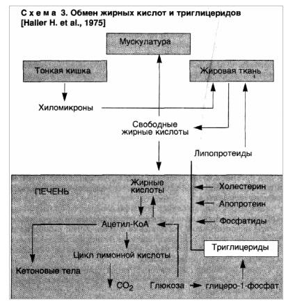Обмен жирных кислот и триглицеридов. Паренхиматозные дистрофии