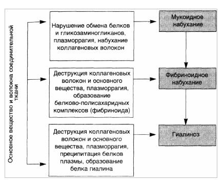 Морфогенез системной прогрессирующей дезорганизации соединительной ткани вследствие ее деструкции