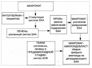 Патогенез АА-амилоидоза. Стромально-сосудистые дистрофии.