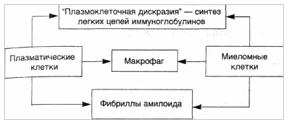 Патогенез AL-амилоидоза