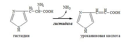 Внутримолекулярное дезаминирование аминокислоты