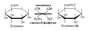 Фосфорилирование моносахаридов