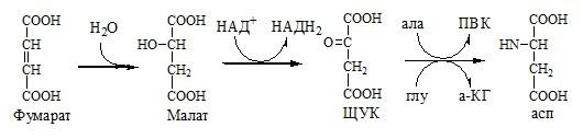 Регенерация аспартата из фумарата