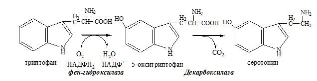 декарбоксилирование аминокислоты триптофан