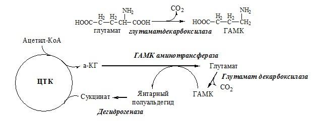 декарбоксилирование аминокислоты