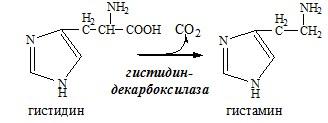 декарбоксилирование аминокислоты гистидин