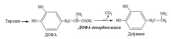 декарбоксилирование аминокислоты тирозин