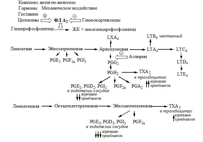 Схема образования эйкозаноидов