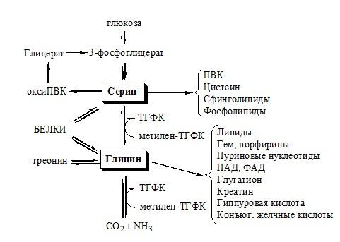 Схема путей обмена серина и глицина