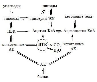 Схема интеграции липидного, углеводного и белкового обмена