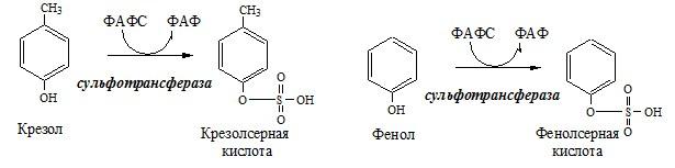 ФАФС используется в обезвреживании ксенобиотиков