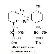 Фенилаланинмонооксигеназа