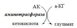 Синтез глутамата аминокислоты