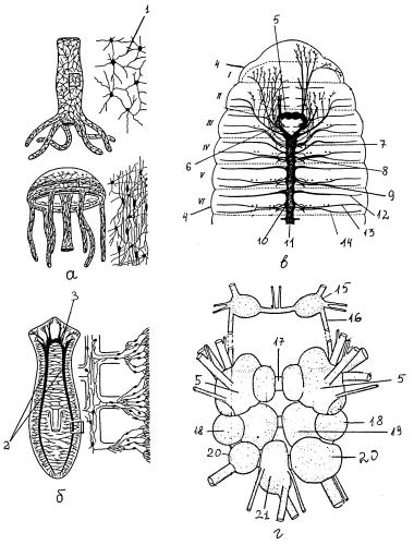 Строение нервной системы стрекающих, плоских червей, кольчатых червей, моллюсков