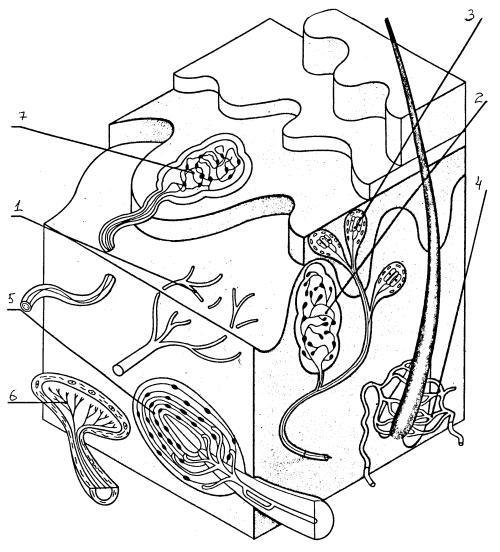 Типы соматосенсорных рецепторов