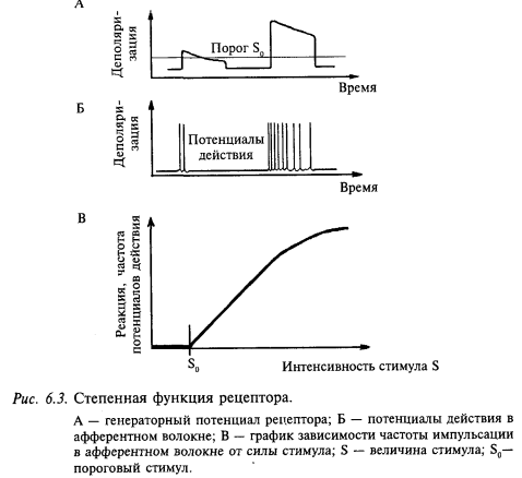 степенная функция рецептора