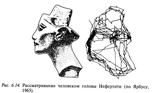 рассматиривание человеком головы нефертити