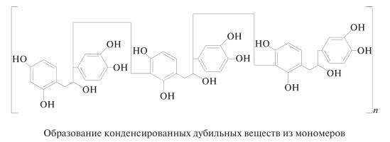 Образование конденсированных дубильных веществ