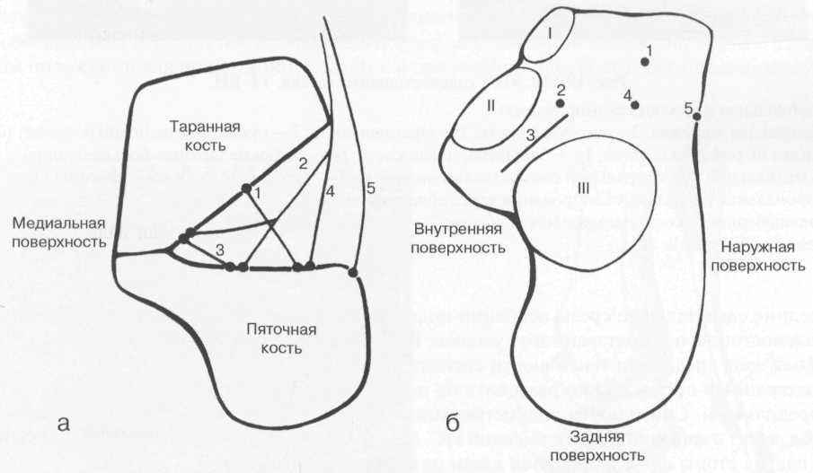 Связки подтаранного сустава.