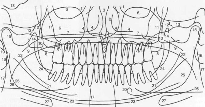 Схема ортопантомограммы [Pasler F.A.].