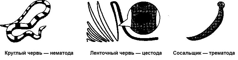 нематода, цестода, трематода