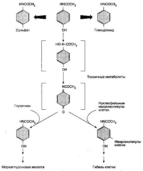 Схема метаболизма ацетаминофена.