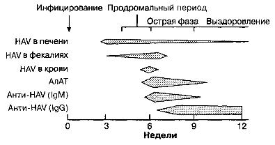 Схема наблюдаемых вариантов сероиммунологических показателей в периоды течения типичной вирусной инфекции гепатита А.