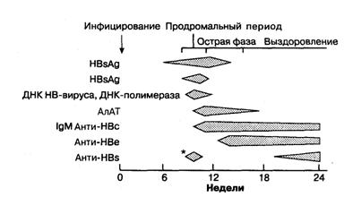 Схема последовательности сероиммунологических изменений, наблюдаемых при типичном гепатите В