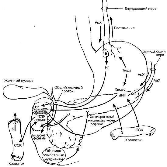 Суммарные пищеварительные эффекты панкреатического секрета.