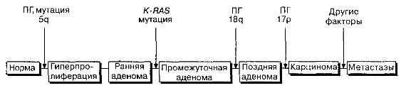 Схема последовательных генетических изменений в многоступенчатом канцерогенезе при раке толстой кишки с дополнениями по Fearon, Vogelstcin.