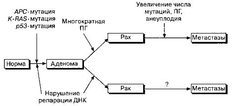Альтернативный генетический механизм был предложен для многоэтапного канцерогенеза в толстой кишке.