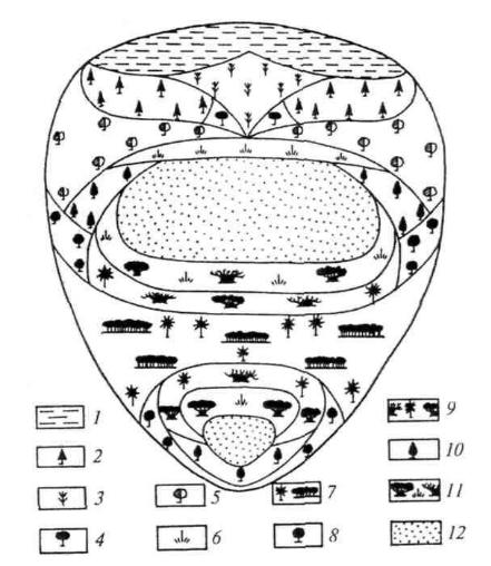 Обобщенная идеальная схема растительности для материков Восточного полушария: 1 – тундры; 2 – темнохвойные леса; 3 – лиственничные леса и редколесья; 4 – сосновые леса; 5 – летнезеленые леса; 6 – степи; 7 – влажнотропические леса; 8 – лавролистные леса; 9 – дождезеленые муссонные леса; 10 – склерофильные (твердолистные) леса; 11 - саванны; 12 – пустыни.