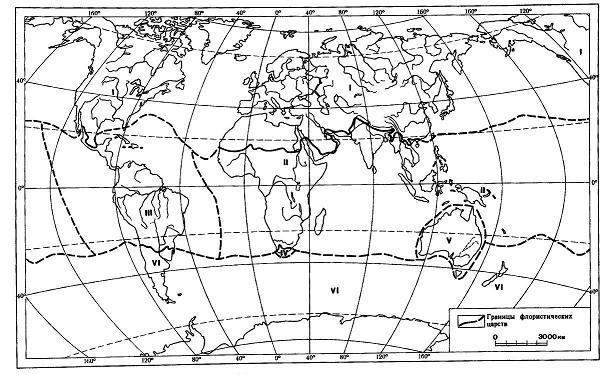 Флористические царства Земли: I – Голарктическое; II – Палеотропическое; III – Неотропическое; IV – Капское; V – Австралийское; VI - Голанктарктическое.