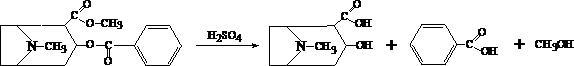 Реакции образования бензойно–этилового эфира.