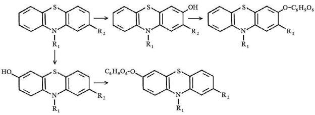 ароматическое гидроксилирование в положениях 3, 6